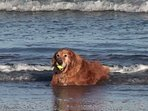 We are dog friendly with no size restrictions! Fido needs a vacation too!