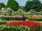 The world-famous Rose Gardens in Regents Park .