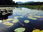 Explore all the Coves of Long Pond