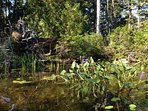 The subtle beauty of Long Pond