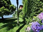 Lush and Green Garden