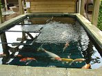 Tincleton Lifestyle Centre - Koi - Guests are welcome to browse