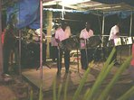 Dance the night away to a steel band