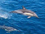 Local attractions - whale and dolphin watching