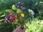 Wild flowers from the meadow - May/June are the best months to see them
