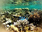 Snorkeling lagoon in front of Sigasiga. many varieties of coral and colorful fish