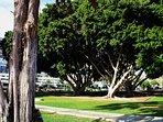 Zona verde puerto rico