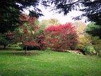 Acers in the garden
