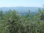 olive trees and views