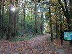 Coligan Woods Walk