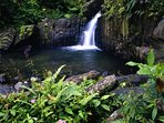 Area El Yunque National Forest