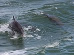 Watch dolphins play from your patio and dock!