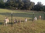 Resident dogs. Separate fenced in yard with direct access to house for your dogs