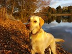 Beautiful walks all year round, so perfect for an out of season holiday or short break, dog friendly