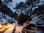 Camino forestal a Riópar nevado