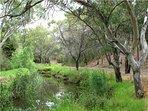 Linear Park Bike / Hike Trail