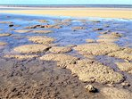 Explore coral flats of Bell Reef at South Wonga Beach