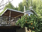 house with orange tree