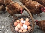 Eggs supplied by our happy free range hens