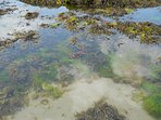 Endless opportunities for rock-pooling at Long Rock beach where the island rears out of the sea.