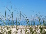 Sea oats on Beach at Diamonds