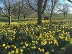 Nettle Hill grounds