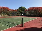 Tennis court surrounded by beautiful flambouyant trees