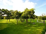 Golf Course,Grassland,Yard,Park,Tree