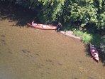 A 15mn du domaine, vous pourrez vous baigner et faire du canoé dans la Dordogne.