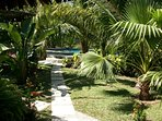 Luscious, shady palm trees everywhere - keeping you cool.