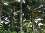 The house really is a Palm Tree Paradise.