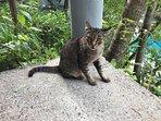 villa cat Tigger