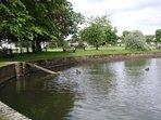 Godstone Horse Pond with resident ducks