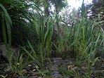 vegetación nativa en canteros
