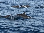 Dolphins in Lovina Bay which you can see up close on an early morning boat trip.