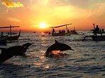 Dolphins breaching in Lovina bay.