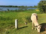 Lagoons and lakes around Arugam bay