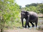 Wildlife in this region roams freely