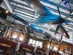 spitfire bar & restaurant