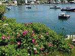 Rugosa roses and lobsters boats.