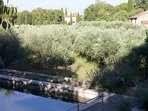 Pool and olive grove in grounds