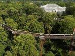 The treetops walkway in Kew