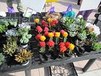 The green market features many different items from produce to house plants.