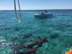 Book a tour to Ho Chin and Shark Ray Alley for great snorkeling with tropical fish, rays and sharks