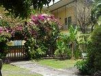 Garden view with bougainvillea in bloom