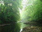 Stunning Hembury Woods is minutes walk away. Many beautiful swimming spots await you!