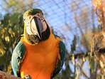 Max! One of our friendly Blue and Gold Macaws