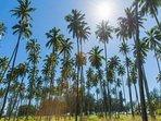 Coconut Coast Palms