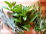 Herbs from the garden, always welcome to help yourselves.