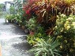 Colourful garden courtyard.